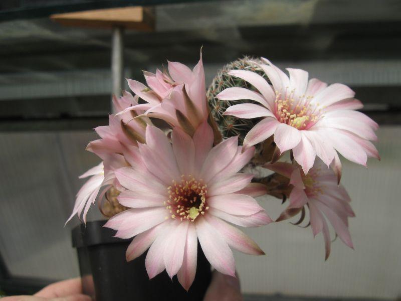 Kaktusy11-2012061.jpg