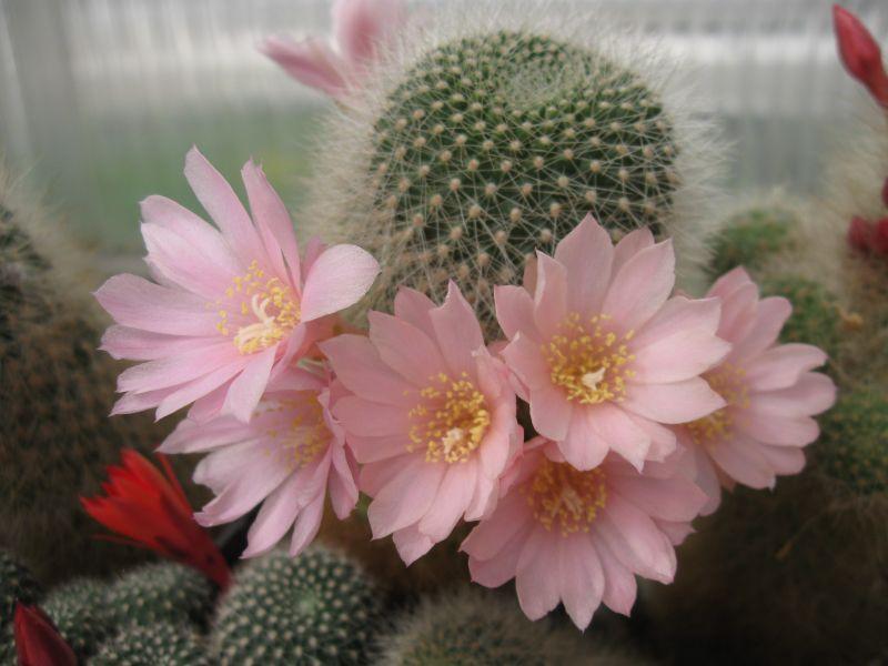 kaktusy8-2014075.jpg