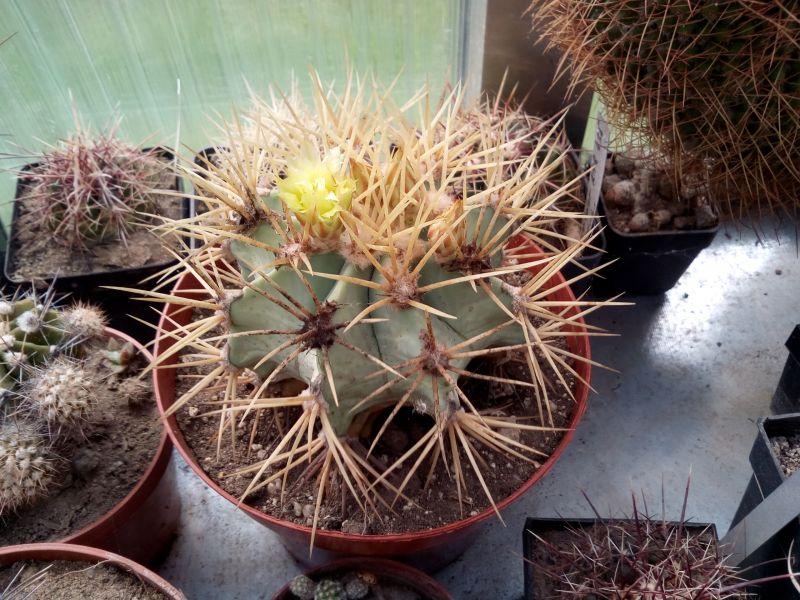 ferocactus.jpg