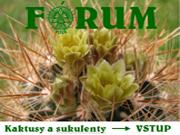 forum-kaktusy.jpg